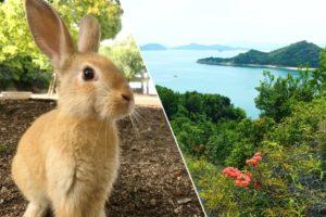 いちばん可愛い動物はイヌでもネコでもなくウサギ。大久野島に行けばそれがわかるよ