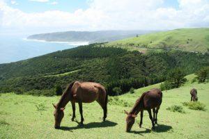 道のど真ん中に野生馬が!南国宮崎の都井岬で、海と馬に癒されてきました